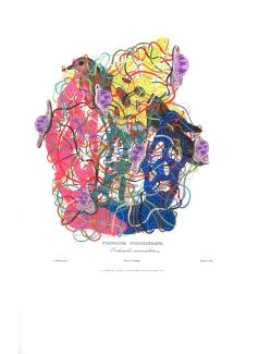 """""""SERIE MAPA DE INTELIGENCIA, OBSECION Y DELIRIOS NATURALES. TRIBUTO A CLAUDIO GAY"""". Acrílico sobre imagen de Aves de Chile – Atlas de Gay. 35 x 46 cm. 2013"""